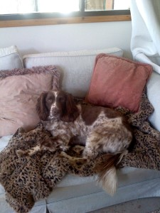 gillie on sofa