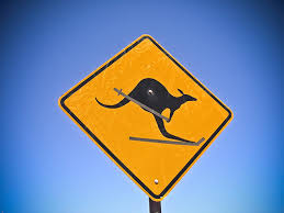 kangaroo skiing